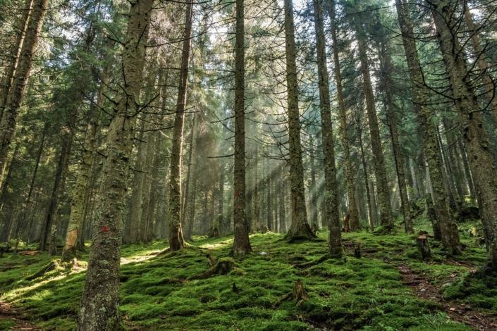 Freie-Demokraten-FDP-Ortsverband-Wedel-Umwelt-Baumpflanzung
